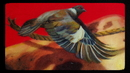From The Sky/Protest The Hero