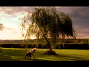 Little Willow/Paul McCartney