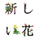 新しい花/関取花