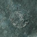 Fossils/Ludovico Einaudi