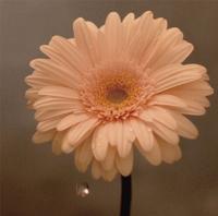 花は咲く/花は咲くプロジェクト