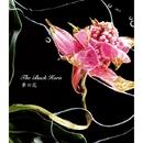 夢の花/THE BACK HORN