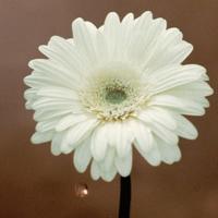 ハイレゾ/花は咲く/花は咲くプロジェクト