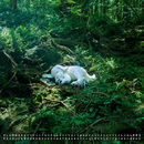 slumbers/藤原ヒロシ