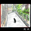 純風/斉藤 和義