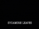 Sycamore Leaves/A-Ha