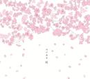 桜 (2013 NEW REMASTER)/河口恭吾
