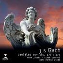 Bach Cantatas/Rene Jacobs