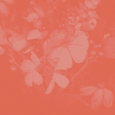 Vacancy EP/Aisha Badru
