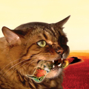 The Meowstro Sings: Guster's Keep It Together/Guster