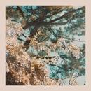 I'm Here (Spring Version)/Rosemary & Garlic