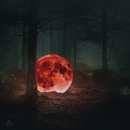 Red Moon: The Piano Forest/Maktub