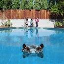 Hippopotamus/Sparks
