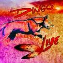 Live/Dingo
