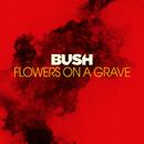 Flowers On A Grave/Bush
