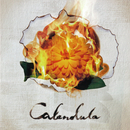 Calendula/a crowd of rebellion