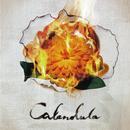 Calendula/a crowd of rebellion