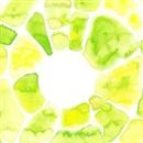 Glimmer of Light/Kaneko Mayumi