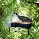 木洩れ日とピアノ/Merry M
