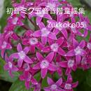 初音ミク五音音階童謡集/Zukkoke05