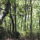 森のなかへ/マツヤマリョー