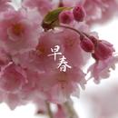 早春テラス ~piano jazz/Various Artists