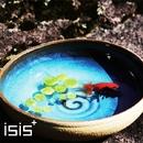 恋花火/LOVE is・・・/isis