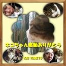 ネコちゃん感動ありがとう/KAI YUMETO