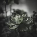 還り咲き/ユアミトス