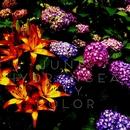 June, Hydrangea, Lily, Color/tori0-0