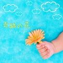 奇跡の花/シュノンソー