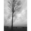 Tree/onetree
