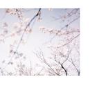 春の光、夏の風 (Piano Version) [映画『ハルチカ』より]/小瀬村晶