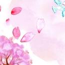 桜の声/Solfe