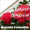 Garnet Camellia/Garnet Camellia