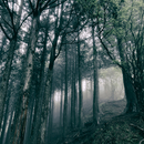 In The Dark Woods/小瀬村晶