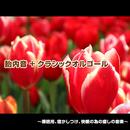 胎内音+クラシックオルゴール ~睡眠用、寝かしつけ、快眠の為の癒しの音楽~/浜崎 vs 浜崎