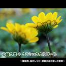 心臓の音+クラシックオルゴール ~睡眠用、寝かしつけ、快眠の為の癒しの音楽~/浜崎 vs 浜崎