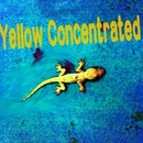 Yellow Concentrated/Yellow Concentrated