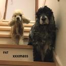 xxxmass/dodo