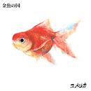 金魚の国/ユメジカ