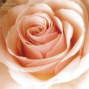 BEST FLOWER - B SIDE COLLECTION -/サニーデイ・サービス