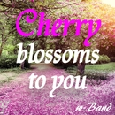 Cherry blossoms to you/w-Band