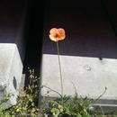 オレンジの花/レムリンク