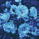 Blue/RAY