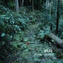 軌跡/Yoshiki Tagashira