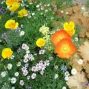 In The Flower/緋維坊