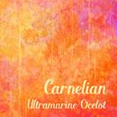 Carnelian/Ultramarine Ocelot