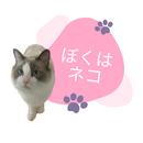 ぼくはネコ/伊東和哉
