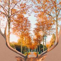 Cool Autum Jazz -涼しい秋の日に聴く ゆったりジャズBGM-